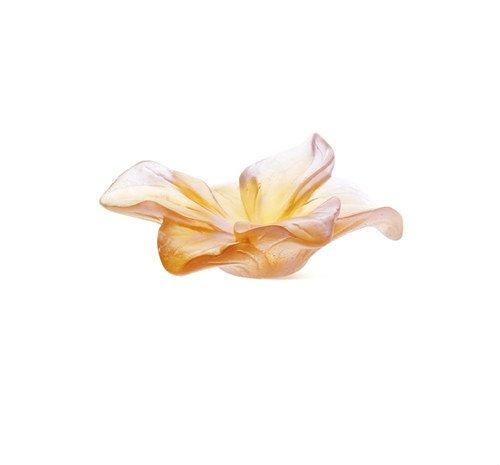 amaryllis-fleur-ambre-daum