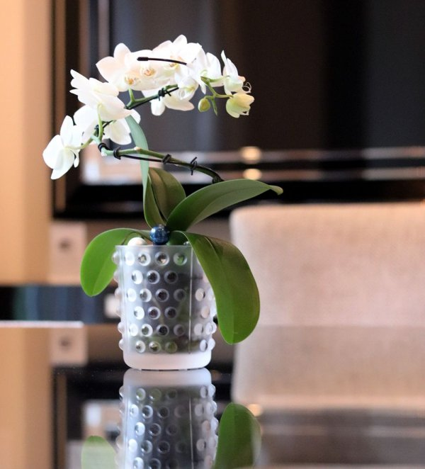 vase-bougie-mossi-incolore-lalique