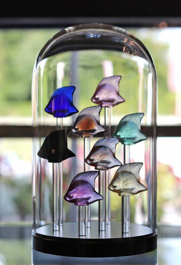 base aquarium 8 poissons Lalique