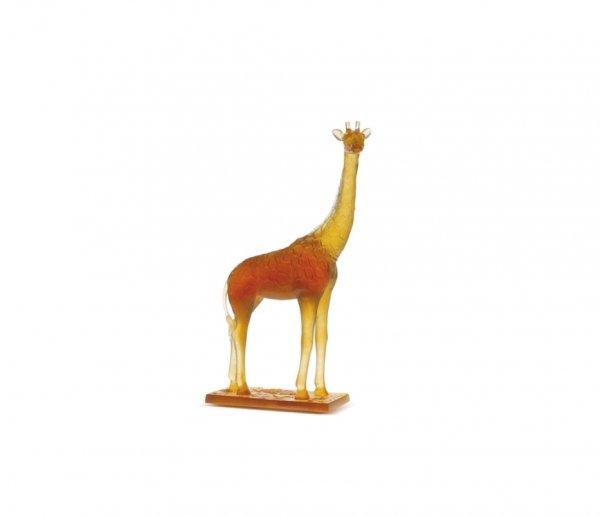 girafe-daum