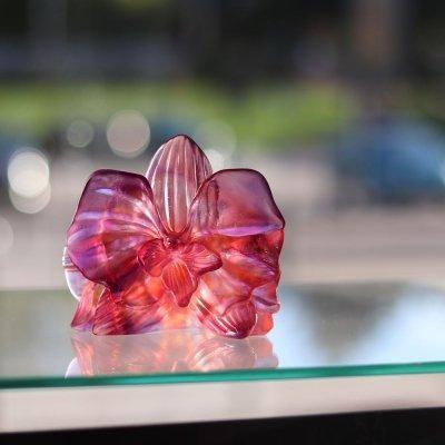 fleur-orchidee-daum-france-