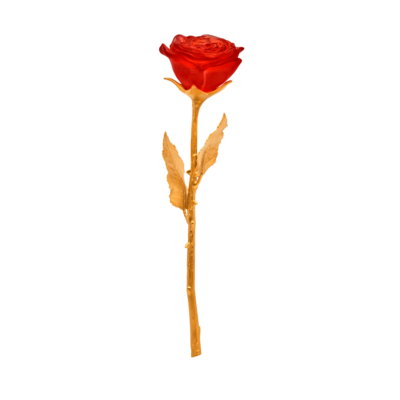 Rose-eternelle-rouge-05590