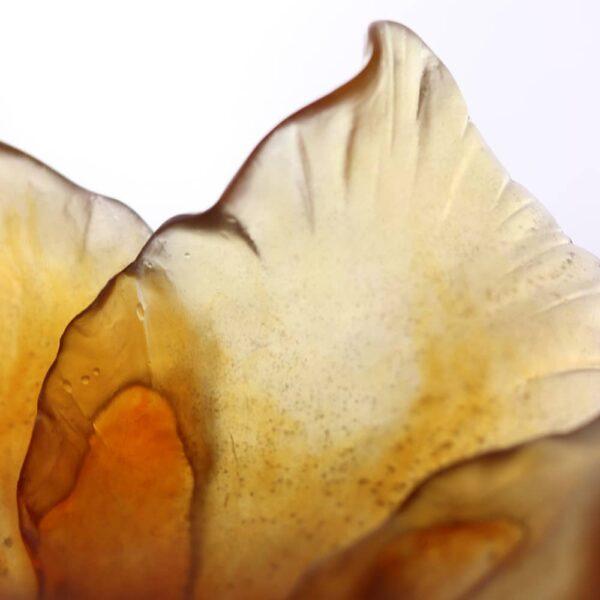 coupe-tulipe-ambre