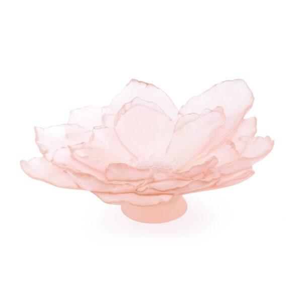 coupe-camelia-daum-rose